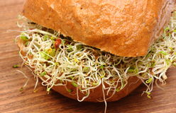 Wholemeal bread roll with alfalfa and radish sprouts Royalty Free Stock Images