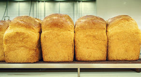 Wholemeal breads on the shelf. Fresh wholemeal bread on the shelf Royalty Free Stock Photos