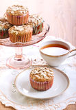 Wholemeal muffins with apricots Stock Image