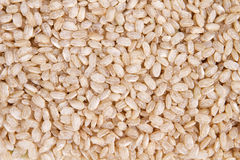 Wholemeal rice. Clouseup, healthy eating Royalty Free Stock Images