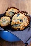 Wholewheat blueberry muffins Royalty Free Stock Image