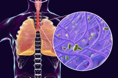 Whooping cough bacteria Bordetella pertussis in human airways. 3D illustration royalty free illustration