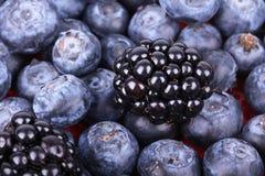Whortleberries and blackberry Stock Photos