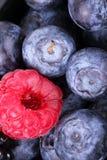 Whortleberries and raspberry Stock Image