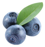 Whortleberry. A whortleberry is on a white background Stock Photos
