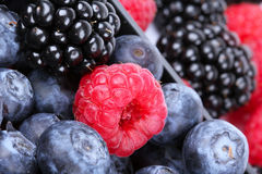 Whortleberry, raspberry and blackberry. Closeup Stock Photos