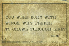 Free Why Crawl Rumi Stock Photography - 54201492