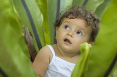 Why am I in here?. A toddler sits and looks out of a tropical plant Stock Photography