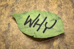 Why question on a sticky note. Why question on a leaf shaped sticky note against handmade bark paper royalty free stock photos