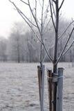 Wiążący w górę drzew obrazy stock