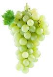 wiązek białych winogron Obraz Stock