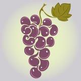 wiązek dojrzałych winogron Obraz Stock