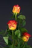 wiązek róże Fotografia Stock