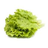 Wiązka świeża zielona sałata na białym tle Obrazy Stock
