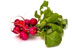 Wiązka świeże czerwone rzodkwie z zielonymi wierzchołkami Obraz Stock
