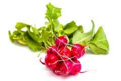 Wiązka świeże czerwone rzodkwie z zielonymi wierzchołkami Fotografia Royalty Free