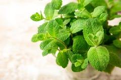 Wiązka świeży zielony organicznie nowy liść na drewnianym stołowym zbliżeniu Fotografia Stock