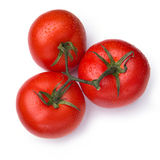 Wiązka świezi pomidory z wodnymi kroplami Zdjęcie Royalty Free
