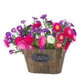 Wiązka asteru i mum kwiaty Obrazy Royalty Free