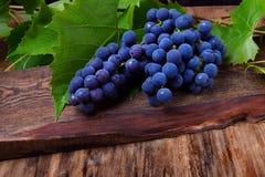 Wiązka błękitni Isabella winogrona obraz royalty free