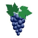 Wiązka błękitni słodcy winogrona Zdjęcia Royalty Free