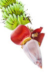 wiązka bananowy kwiat zdjęcie royalty free