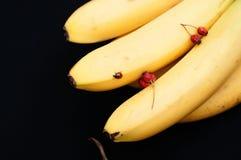 Wiązka banany na czarnym tle Świeży organicznie banan, Świezi banany na kuchennym stole Obraz Royalty Free