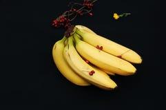 Wiązka banany na czarnym tle Świeży organicznie banan, Świezi banany na kuchennym stole Fotografia Stock