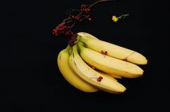 Wiązka banany na czarnym tle Świeży organicznie banan, Świezi banany na kuchennym stole Zdjęcia Stock