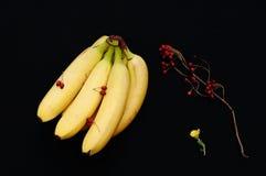Wiązka banany na czarnym tle Świeży organicznie banan, Świezi banany na kuchennym stole Zdjęcia Royalty Free