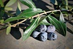 Wiązka ciemne oliwki z życiami na kamieniu Zdjęcie Royalty Free