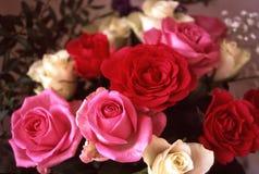 Wiązka czerwieni i menchii róże Obrazy Royalty Free