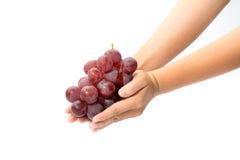 Wiązka czerwoni winogrona w dziecka ` s ręce Obraz Royalty Free