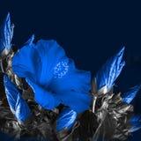 Wiązka czerwony poślubnika kwiat Fotografia Stock