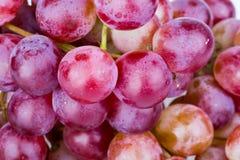 Wiązka czerwony winogrono na białym tle Zdjęcie Royalty Free