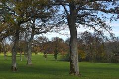 Wiązka dębowych drzew jesieni krajobraz Obraz Royalty Free