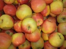 Wiązka dojrzali czerwoni jabłka fotografia stock