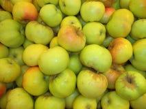 Wiązka dojrzali nowi upraw jabłka obraz stock
