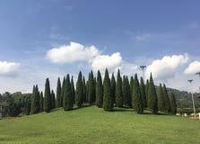 Wiązka Drzewa zdjęcie stock