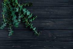 Wiązka eukaliptus rozgałęzia się na czarnym tle Natury wiosny minimalistic skład, odgórny widok, mieszkanie nieatutowy Zdjęcia Stock