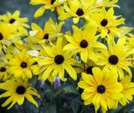 Wiązka kolor żółty kwitnie wpólnie Fotografia Royalty Free