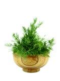 Wiązka koperu ziele Zdjęcie Royalty Free