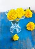 Wiązka kwiaty w szklanej zlewce na błękicie Zdjęcia Stock