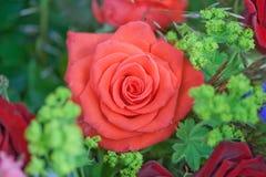 wiązka kwitnie róże Fotografia Stock