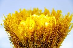 Wiązka lna Złoty kolor Kuchenny wystrój zdjęcie stock