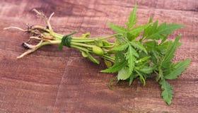 Wiązka neem roślina Obrazy Royalty Free
