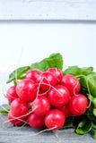 Wiązka organicznie świeże czerwone rzodkwie Obrazy Royalty Free