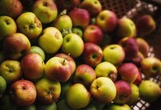 Wiązka organicznie jabłka Zdjęcia Royalty Free