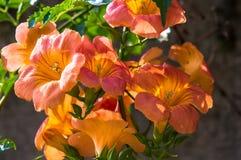 Wiązka pomarańczowe dzień leluje Zdjęcia Stock
