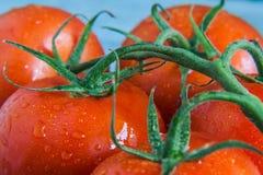 Wiązka pomidory z kropli zakończeniem Zdjęcie Stock